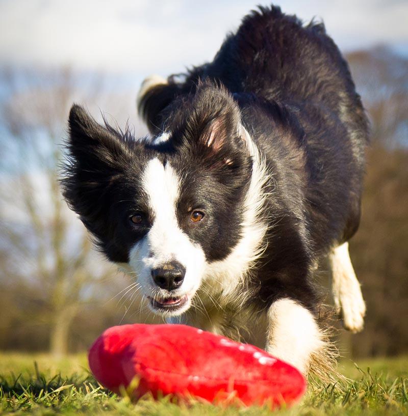 Hundetrainerin Madeleine Zamani Hund Flash