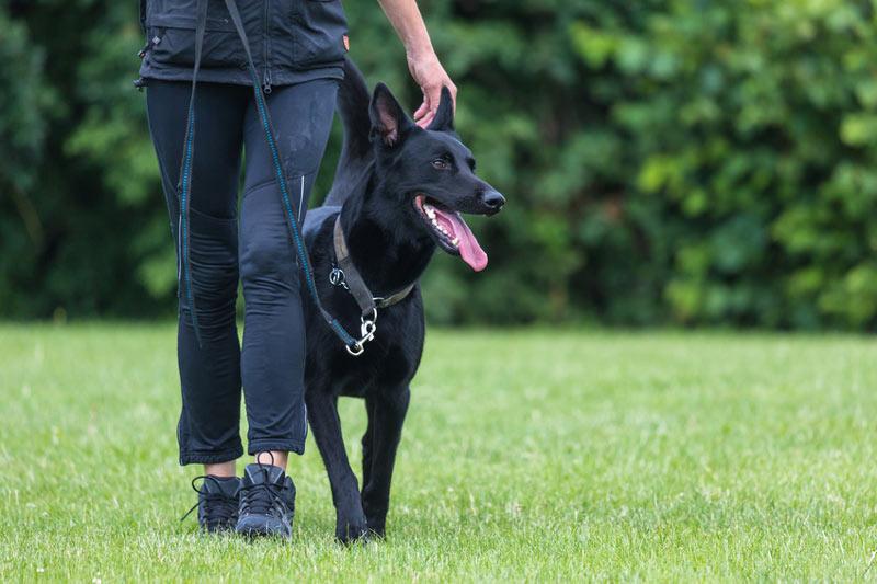 Begleithundepruefung-Hundeschule-Koeln