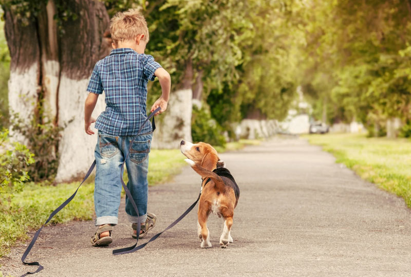 Kinderkurs-Hundeschule-Koeln