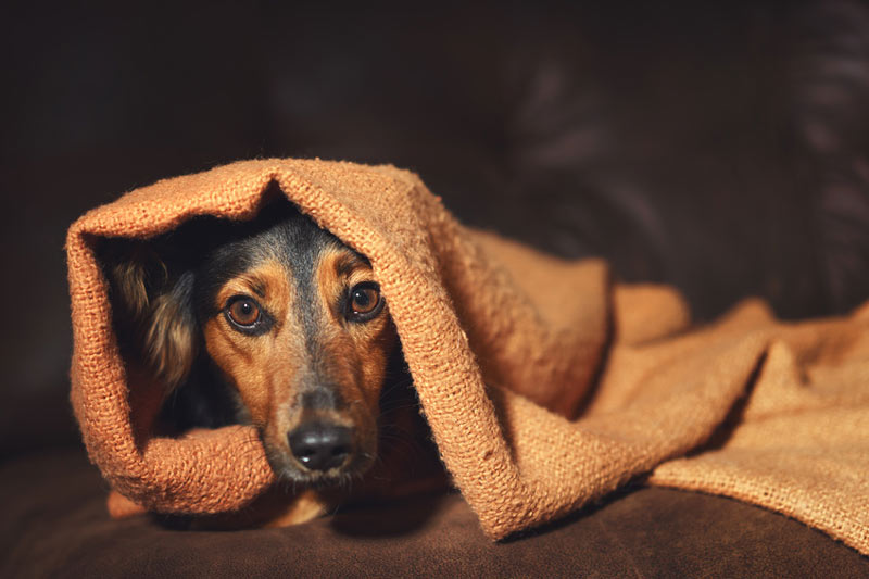 Angsthundekurs-Hundeschule Colonia