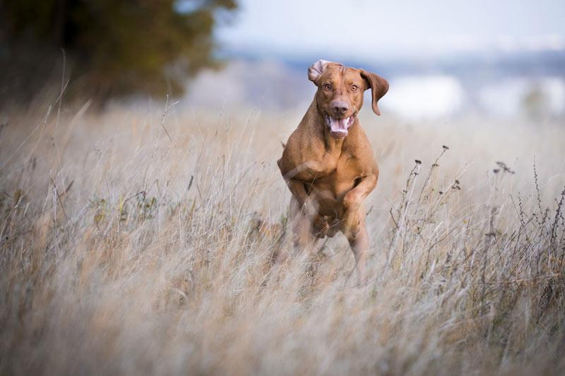 Anti-Jagd-Kurs-Hundeschule Colonia